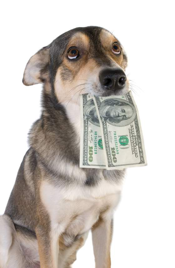 4 Quick tips for finding cheap dog supplies