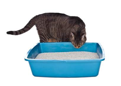 Litter box comparisons you'll want to see