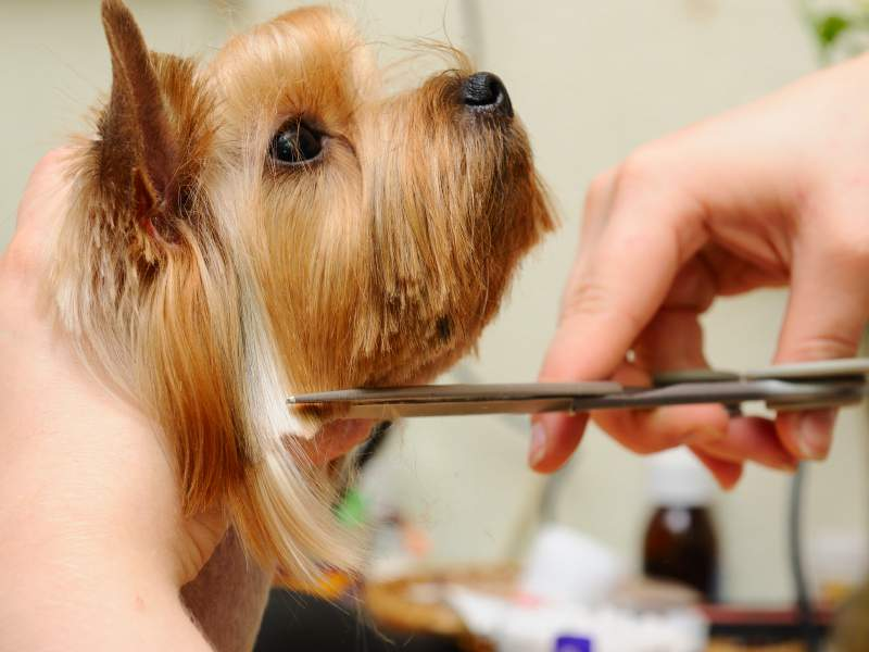 Importance of Proper and Regular Grooming of Your Dog