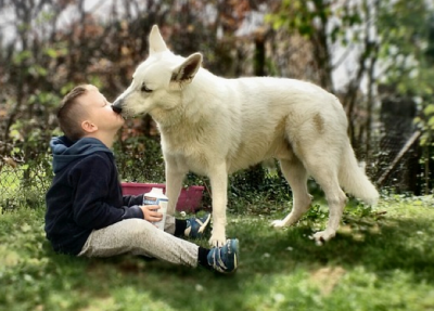 Dog licking boy