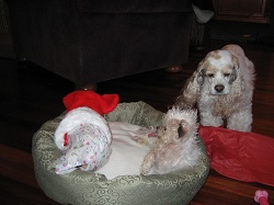Betty Boop - A Canine Christmas Miracle