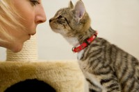 Pets found to be good to reduce stress