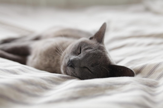 cat sleeping on white blanket
