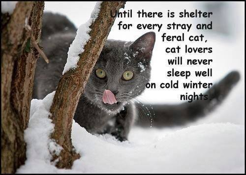 Caring for feral and stray cats in winter
