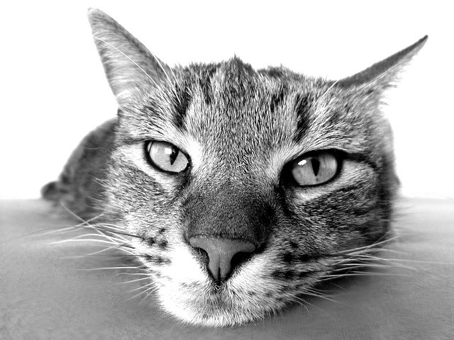 Feline Epilepsy: Understanding the Mystery of Cat Seizures