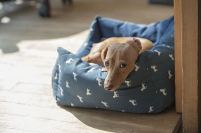 getting the right dog bed for your puppy