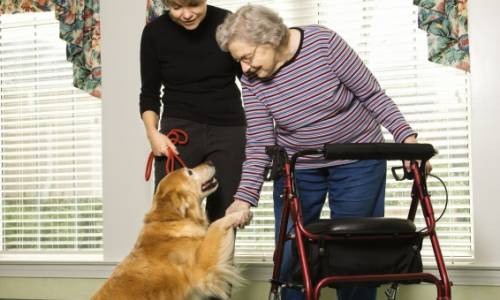 Service dog training helps those in need