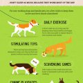 What do you know about your dog's sleep!